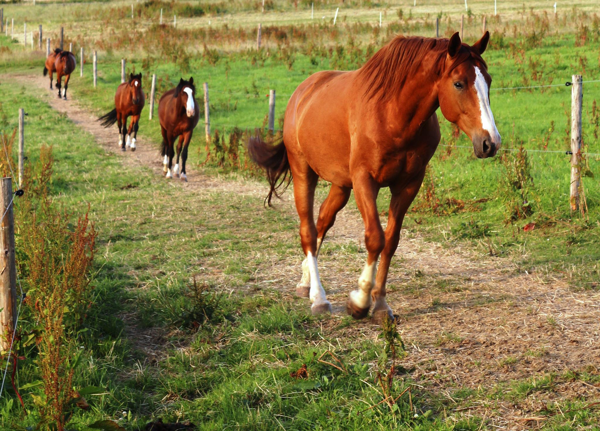 Liste der Pferdekrankheiten